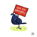 <b>[Le bureau des questions existentielles] Pourquoi y a-t-il des corbeaux à Toulouse ?</b>