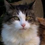 <b>A #Toulouse, la gardienne du Jardin de l&#039;Observatoire prend la pose... @visiteztoulousepic.twit...</b>