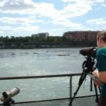 <b>Dimanche, observez la nature depuis la terrasse de l'@EDFBazacle :  http://bit.ly/2biqPMH #Toulouse...</b>