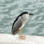 <b>Aujourd&#039;hui, observez la nature depuis la terrasse de l'@EDFBazacle :  http://bit.ly/2biqPMH  ...</b>