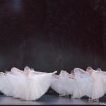 <b>Dès ce soir, Giselle de @kader_belarbi, au @theatrecapitole !  http://bit.ly/2kMF9nk #Toulouse #vis...</b>