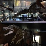 <b>Muséum de Toulouse #museum #skeleton #fossil #whale #squid #dinosaur #naturalhistory #travel #gaytra...</b>