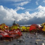 <b>#JeudiPhoto La Grave version automne.   https://www.instagram.com/remysirieix/ #Toulousepic.twitter...</b>