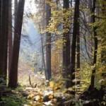<b>Diversifier son patrimoine avec un placement en parts de Groupement forestier</b>