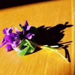 <b>Les premières violettes! #LundiFleuripic.twitter.com/JC4xBcecOu</b>