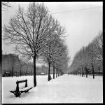 <b>6 février 1954, les allées Frédéric-mistral sous la neige Cliché Delgay :  http://basededonnees.arch...</b>