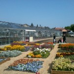 <b>Ce week-end, portes-ouvertes des serres municipales à #Toulouse :  http://bit.ly/2KtLltp  #visitezt...</b>