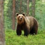 <b>François de Rugy confirme le « Plan ours » de Nicolas Hulot dans les Pyrénées</b>
