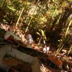 <b>Seine-et-Marne. Encore un grand nettoyage des déchets en forêt de Fontainebleau</b>
