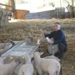 <b>Le Poiré-sur-Vie : Dix-huit moutons retrouvés morts à la Tenaillère</b>