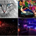 <b>Salon du chat, concerts au Metronum, nouvelle boîte de nuit : que faire à Toulouse, ce week-end ?</b>