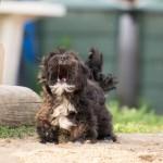 <b>Cette commune veut interdire aux chiens d&#039;aboyer</b>