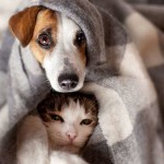 <b>Mon chien ou mon chat attrape froid : ce qu&#039;il faut faire</b>