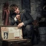<b>Sorties Cinéma : Les Animaux fantastiques 2, Les Chatouilles, Suspiria, Millenium…</b>