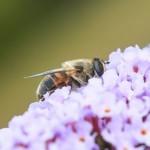 <b>Les insectes pourraient disparaître de la planète d'ici 100 ans</b>