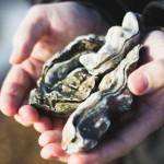<b>Morbihan : un virus dans les eaux en rivière de Crac'h, interdiction de pêche des coquillages</b>