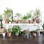 <b>Toulouse. Bon plan : une grande vente de plantes (à partir de 2€) prévue au centre-ville</b>