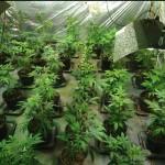 <b>A Gisors, dans l'Eure, le réparateur et vendeur de motos cultivait aussi du cannabis dans sa ca...</b>