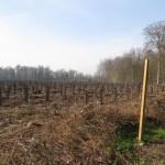 <b>Yvelines. 28000 arbres plantés en forêt de Saint-Germain-en-Laye pour compenser les coupes du Tram ...</b>