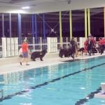 <b>Une dizaine de chiens plonge dans la piscine de Granville</b>