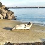 <b>VIDÉO. Cherbourg : le phoque a quitté le port Chantereyne</b>