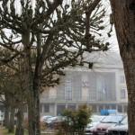<b>Les tilleuls de place de la mairie d&#039;Argentan vont disparaître</b>