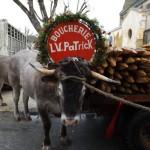 <b>Gironde : les Bœufs Gras défilent ce dimanche dans les rues de Captieux</b>