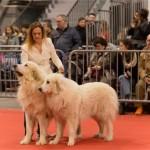 <b>Toulouse : les meilleurs chiens ont rendez-vous à l'Expo canine internationale, ce week-end</b>