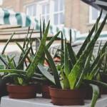 <b>Lille. Une grande vente de plantes dès 2 euros les 2 et 3 mars</b>