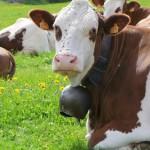 <b>Le GAB du Jura souhaite associer les agriculteurs</b>