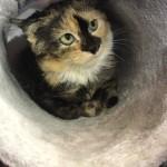<b>Challans : Opaline, 6 mois, attend une nouvelle famille</b>
