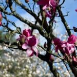 <b>A Cherbourg, la renaissance du jardin Favier se poursuit</b>