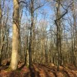 <b>Journée Internationale des Forêts du 16 mars : le programme en forêt de Bercé</b>