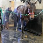 <b>Hippisme. Pas encore de retraite pour Bold Eagle : &quot;ce cheval mérite le droit à l&#039;erreur&q...</b>