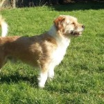 <b>Milou est le chien de la semaine à adopter à la SPA de Saint-Brieuc</b>