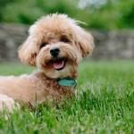 <b>Accessibilité, propreté, espaces vert... quelles sont les villes où il fait bon vivre avec un chien ...</b>