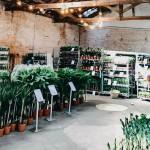 <b>Toulouse. Grande vente de plantes à prix cassés lors d'un jardin éphémère en centre-ville</b>