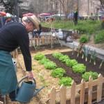 <b>Toulouse : comment participer aux 48h de l'agriculture urbaine, ce week-end</b>