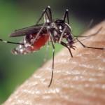 <b>Le moustique tigre est déjà de retour à Toulouse et en Occitanie : la chasse est ouverte</b>