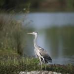 <b>Domaine des Oiseaux, le « paradis » des amoureux de la nature</b>