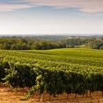 <b>Dégustations de vin, fromage et pâté... un trail complètement déjanté dans un vignoble du Gers</b>