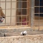 <b>Une manifestation pour dire stop aux cirques avec animaux dans Toulouse</b>
