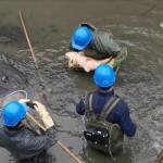 <b>VIDÉO. Toulouse. Le canal du Midi vidé, les poissons sauvés par les pêcheurs, au milieu des vélos</b>