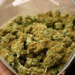 <b>Toulouse. Alertés par l'odeur, les policiers découvrent des sacs remplis d'herbe dans un a...</b>