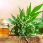 <b>Toulouse. Les produits à base de CBD, le cannabis light, séduisent mais demeurent encore méconnus</b>